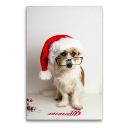 Premium Textil-Leinwand 60 x 90 cm Hoch-Format Hund mit Weihnachtsmütze | Wandbild, HD-Bild auf Keilrahmen, Fertigbild auf hochwertigem Vlies, Leinwanddruck von Sonja Rachbauer