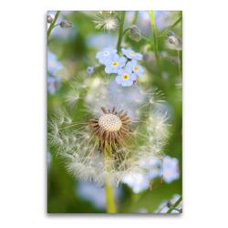Premium Textil-Leinwand 60 x 90 cm Hoch-Format Pusteblume mit Vergissmeinnicht | Wandbild, HD-Bild auf Keilrahmen, Fertigbild auf hochwertigem Vlies, Leinwanddruck von Gisela Kruse