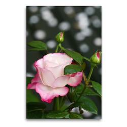 Premium Textil-Leinwand 60 x 90 cm Hoch-Format Rosa 'Nostalgie' | Wandbild, HD-Bild auf Keilrahmen, Fertigbild auf hochwertigem Vlies, Leinwanddruck von Gisela Kruse