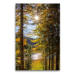 Premium Textil-Leinwand 60 x 90 cm Hoch-Format Schöne Bäume in Hochformat | Wandbild, HD-Bild auf Keilrahmen, Fertigbild auf hochwertigem Vlies, Leinwanddruck von Christa Kramer