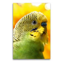 Premium Textil-Leinwand 60 x 90 cm Hoch-Format Wellensittich – Portrait eines grünes Welliküken | Wandbild, HD-Bild auf Keilrahmen, Fertigbild auf hochwertigem Vlies, Leinwanddruck von Björn Bergmann