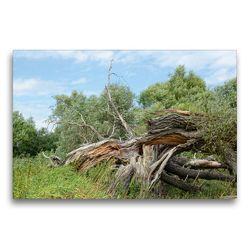 Premium Textil-Leinwand 75 x 50 cm Quer-Format Alte Weide vom Sturm zerbrochen | Wandbild, HD-Bild auf Keilrahmen, Fertigbild auf hochwertigem Vlies, Leinwanddruck von Anja Frost