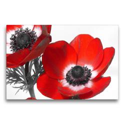 Premium Textil-Leinwand 75 x 50 cm Quer-Format Anemonen | Wandbild, HD-Bild auf Keilrahmen, Fertigbild auf hochwertigem Vlies, Leinwanddruck von Stefanie Kools