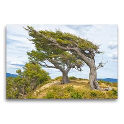 Premium Textil-Leinwand 75 x 50 cm Quer-Format Arboles Banderas – die durch starken Wind geformten Bäume Patagoniens   Wandbild, HD-Bild auf Keilrahmen, Fertigbild auf hochwertigem Vlies, Leinwanddruck von CALVENDO