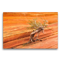 Premium Textil-Leinwand 75 x 50 cm Quer-Format Bäume in der Welt, the Wave Arizona | Wandbild, HD-Bild auf Keilrahmen, Fertigbild auf hochwertigem Vlies, Leinwanddruck von Björn Alicke