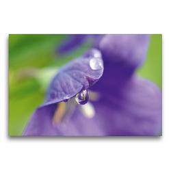 Premium Textil-Leinwand 75 x 50 cm Quer-Format Ballonblume | Wandbild, HD-Bild auf Keilrahmen, Fertigbild auf hochwertigem Vlies, Leinwanddruck von Susanne Herppich