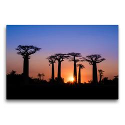 Premium Textil-Leinwand 75 x 50 cm Quer-Format Baobab – Allee | Wandbild, HD-Bild auf Keilrahmen, Fertigbild auf hochwertigem Vlies, Leinwanddruck von Rolf Dietz