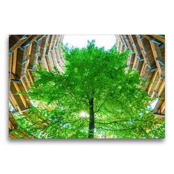 Premium Textil-Leinwand 75 x 50 cm Quer-Format Baumwipfelpfad | Wandbild, HD-Bild auf Keilrahmen, Fertigbild auf hochwertigem Vlies, Leinwanddruck von Christian Müller