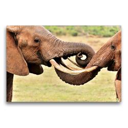 Premium Textil-Leinwand 75 x 50 cm Quer-Format Begrüßung zweier Elefanten | Wandbild, HD-Bild auf Keilrahmen, Fertigbild auf hochwertigem Vlies, Leinwanddruck von Jürgen Feuerer