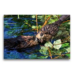 Premium Textil-Leinwand 75 x 50 cm Quer-Format Biber Kuss | Wandbild, HD-Bild auf Keilrahmen, Fertigbild auf hochwertigem Vlies, Leinwanddruck von Kattobello