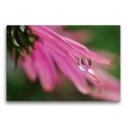 Premium Textil-Leinwand 75 x 50 cm Quer-Format Blüte einer Clematis mit Wassertropfen | Wandbild, HD-Bild auf Keilrahmen, Fertigbild auf hochwertigem Vlies, Leinwanddruck von Susanne Herppich