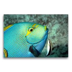 Premium Textil-Leinwand 75 x 50 cm Quer-Format Der Augenfleck-Doktorfisch lässt sich gerne putzen! | Wandbild, HD-Bild auf Keilrahmen, Fertigbild auf hochwertigem Vlies, Leinwanddruck von Ute Niemann