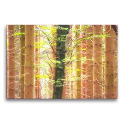 Premium Textil-Leinwand 75 x 50 cm Quer-Format Der helle Lichtfall zwischen den Bäumen | Wandbild, HD-Bild auf Keilrahmen, Fertigbild auf hochwertigem Vlies, Leinwanddruck von Bettina Hackstein
