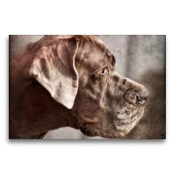 Premium Textil-Leinwand 75 x 50 cm Quer-Format Deutsche Dogge | Wandbild, HD-Bild auf Keilrahmen, Fertigbild auf hochwertigem Vlies, Leinwanddruck von Kattobello