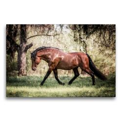 Premium Textil-Leinwand 75 x 50 cm Quer-Format Die Faszinierende Welt der Pferde | Wandbild, HD-Bild auf Keilrahmen, Fertigbild auf hochwertigem Vlies, Leinwanddruck von Sabrina Mischnik