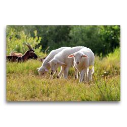 Premium Textil-Leinwand 75 x 50 cm Quer-Format Dreierbande | Wandbild, HD-Bild auf Keilrahmen, Fertigbild auf hochwertigem Vlies, Leinwanddruck von Sabine Löwer