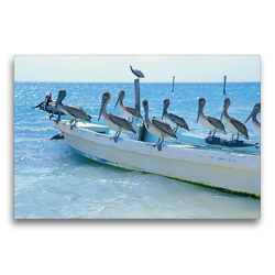 Premium Textil-Leinwand 75 x 50 cm Quer-Format Drollige Pelikane lassen sich auf einem Fischerboot nieder | Wandbild, HD-Bild auf Keilrahmen, Fertigbild auf hochwertigem Vlies, Leinwanddruck von CALVENDO