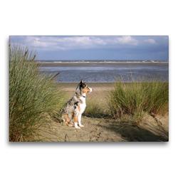 Premium Textil-Leinwand 75 x 50 cm Quer-Format Ein Hund beobachtet den Strand | Wandbild, HD-Bild auf Keilrahmen, Fertigbild auf hochwertigem Vlies, Leinwanddruck von Susanne Herppich