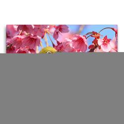 Premium Textil-Leinwand 75 x 50 cm Quer-Format Ein Japan-Brillenvogel inmitten rosafarbener Kirschblüten. | Wandbild, HD-Bild auf Keilrahmen, Fertigbild auf hochwertigem Vlies, Leinwanddruck von CALVENDO