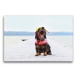 Premium Textil-Leinwand 75 x 50 cm Quer-Format Elly leitet den Sommer ein | Wandbild, HD-Bild auf Keilrahmen, Fertigbild auf hochwertigem Vlies, Leinwanddruck von Anja Foto Grafia Fotografie