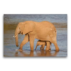 Premium Textil-Leinwand 75 x 50 cm Quer-Format Emotionale Momente: Aus dem Leben der Elefanten. / CH-Version | Wandbild, HD-Bild auf Keilrahmen, Fertigbild auf hochwertigem Vlies, Leinwanddruck von Ingo Gerlach GDT