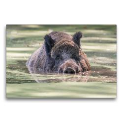 Premium Textil-Leinwand 75 x 50 cm Quer-Format Emotionale Momente: Wildschweine im Wasser | Wandbild, HD-Bild auf Keilrahmen, Fertigbild auf hochwertigem Vlies, Leinwanddruck von Ingo Gerlach