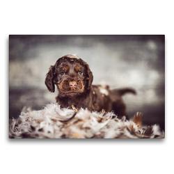 Premium Textil-Leinwand 75 x 50 cm Quer-Format English Cocker Spaniel Welpen Vol. 2 | Wandbild, HD-Bild auf Keilrahmen, Fertigbild auf hochwertigem Vlies, Leinwanddruck von Sabrina Wobith Photography – FotosVonMaja