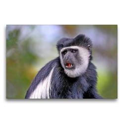 Premium Textil-Leinwand 75 x 50 cm Quer-Format Entspanntes Affenleben | Wandbild, HD-Bild auf Keilrahmen, Fertigbild auf hochwertigem Vlies, Leinwanddruck von Michael Herzog