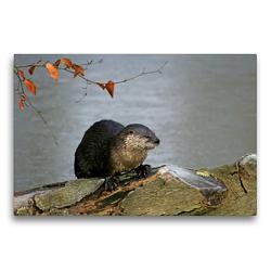 Premium Textil-Leinwand 75 x 50 cm Quer-Format Fischotter | Wandbild, HD-Bild auf Keilrahmen, Fertigbild auf hochwertigem Vlies, Leinwanddruck von Antje Lindert-Rottke