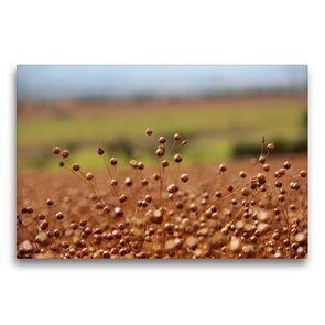 Premium Textil-Leinwand 75 x 50 cm Quer-Format Flachs | Wandbild, HD-Bild auf Keilrahmen, Fertigbild auf hochwertigem Vlies, Leinwanddruck von Flori0