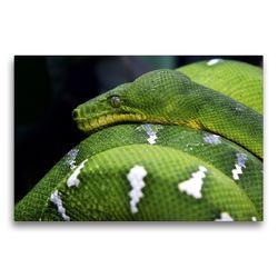 Premium Textil-Leinwand 75 x 50 cm Quer-Format Gefährliche Schlangen – Grüner Hundskopfschlinger | Wandbild, HD-Bild auf Keilrahmen, Fertigbild auf hochwertigem Vlies, Leinwanddruck von Michael Herzog