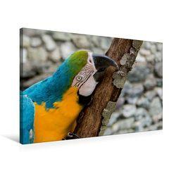 Premium Textil-Leinwand 75 x 50 cm Quer-Format Gelbbrustara   Wandbild, HD-Bild auf Keilrahmen, Fertigbild auf hochwertigem Vlies, Leinwanddruck von Angelika Beuck von Beuck,  Angelika