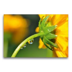 Premium Textil-Leinwand 75 x 50 cm Quer-Format Gelbe Blüte mit Wassertropfen und Spiegelung | Wandbild, HD-Bild auf Keilrahmen, Fertigbild auf hochwertigem Vlies, Leinwanddruck von Susanne Herppich