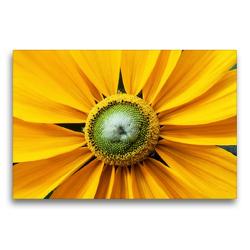 Premium Textil-Leinwand 75 x 50 cm Quer-Format Gelber Sonnenhut | Wandbild, HD-Bild auf Keilrahmen, Fertigbild auf hochwertigem Vlies, Leinwanddruck von Xenia Schlossherr