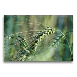 Premium Textil-Leinwand 75 x 50 cm Quer-Format Getreide | Wandbild, HD-Bild auf Keilrahmen, Fertigbild auf hochwertigem Vlies, Leinwanddruck von Flori0