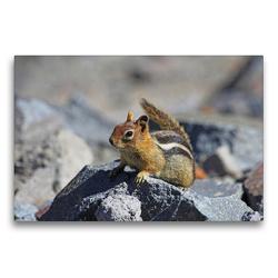 Premium Textil-Leinwand 75 x 50 cm Quer-Format Goldmantelziesel im Crater Lake Nationalpark (USA) | Wandbild, HD-Bild auf Keilrahmen, Fertigbild auf hochwertigem Vlies, Leinwanddruck von Jana Thiem-Eberitsch