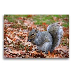 Premium Textil-Leinwand 75 x 50 cm Quer-Format Grauhörnchen im Central Park New York (USA) | Wandbild, HD-Bild auf Keilrahmen, Fertigbild auf hochwertigem Vlies, Leinwanddruck von Jana Thiem-Eberitsch