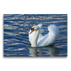 Premium Textil-Leinwand 75 x 50 cm Quer-Format Höckerschwan (Cygnus olor)   Wandbild, HD-Bild auf Keilrahmen, Fertigbild auf hochwertigem Vlies, Leinwanddruck von kattobello