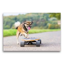 Premium Textil-Leinwand 75 x 50 cm Quer-Format Hund mit Skateboard | Wandbild, HD-Bild auf Keilrahmen, Fertigbild auf hochwertigem Vlies, Leinwanddruck von Christian Müller