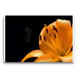 Premium Textil-Leinwand 75 x 50 cm Quer-Format i wie Inspiration – Gedanken und Fotografien | Wandbild, HD-Bild auf Keilrahmen, Fertigbild auf hochwertigem Vlies, Leinwanddruck von Martina Marten