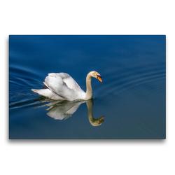 Premium Textil-Leinwand 75 x 50 cm Quer-Format Imponiergehabe   Wandbild, HD-Bild auf Keilrahmen, Fertigbild auf hochwertigem Vlies, Leinwanddruck von Ursula Di Chito