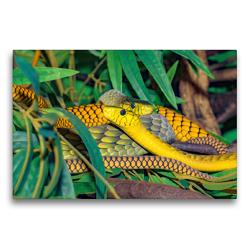 Premium Textil-Leinwand 75 x 50 cm Quer-Format Jamesons Mambas | Wandbild, HD-Bild auf Keilrahmen, Fertigbild auf hochwertigem Vlies, Leinwanddruck von Rose Hurley