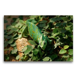 Premium Textil-Leinwand 75 x 50 cm Quer-Format Jemenchamäleon | Wandbild, HD-Bild auf Keilrahmen, Fertigbild auf hochwertigem Vlies, Leinwanddruck von Kattobello