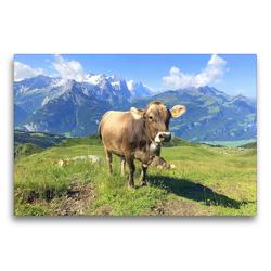 Premium Textil-Leinwand 75 x 50 cm Quer-Format Junge Kuh auf der Alm | Wandbild, HD-Bild auf Keilrahmen, Fertigbild auf hochwertigem Vlies, Leinwanddruck von Rose Hurley