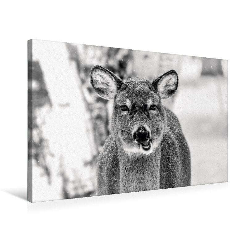 premium textil leinwand 75 x 50 cm quer format kanadischer. Black Bedroom Furniture Sets. Home Design Ideas