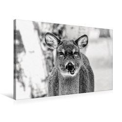 Premium Textil-Leinwand 75 x 50 cm Quer-Format Kanadischer Weißwedelhirsch | Wandbild, HD-Bild auf Keilrahmen, Fertigbild auf hochwertigem Vlies, Leinwanddruck von Marianne Drews