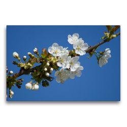 Premium Textil-Leinwand 75 x 50 cm Quer-Format Kirschblüte | Wandbild, HD-Bild auf Keilrahmen, Fertigbild auf hochwertigem Vlies, Leinwanddruck von kattobello