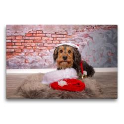 Premium Textil-Leinwand 75 x 50 cm Quer-Format Kleiner Weihnachtsmann | Wandbild, HD-Bild auf Keilrahmen, Fertigbild auf hochwertigem Vlies, Leinwanddruck von Annett Mirsberger tierpfoto