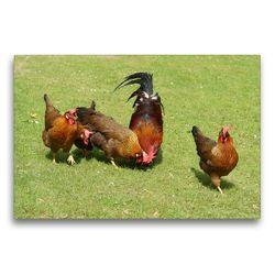 Premium Textil-Leinwand 75 x 50 cm Quer-Format Kunterbunte Hühnerschar | Wandbild, HD-Bild auf Keilrahmen, Fertigbild auf hochwertigem Vlies, Leinwanddruck von kattobello