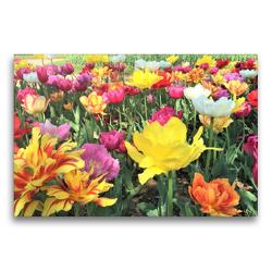 Premium Textil-Leinwand 75 x 50 cm Quer-Format Kunterbunte Tulpen: Eine Wohltat für die Augen. | Wandbild, HD-Bild auf Keilrahmen, Fertigbild auf hochwertigem Vlies, Leinwanddruck von Christine Konkel